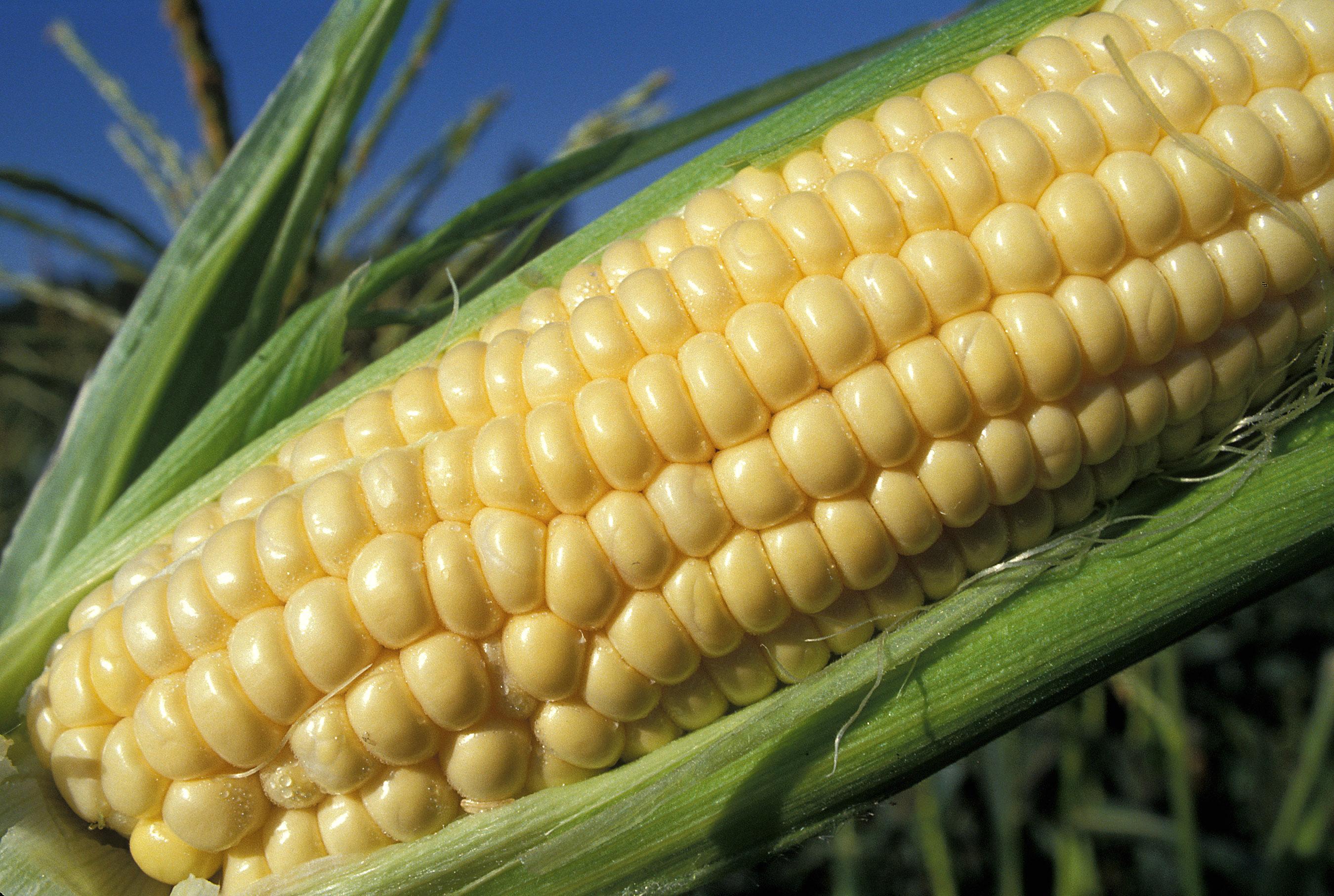 Monsanto: Bayer's Acquisition Will Fail (And Monsanto Will Receive $2 Billion) - Monsanto Company (NYSE:MON)   Seeking Alpha