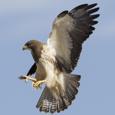 IP Hawk