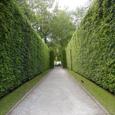 Celestial Hedge